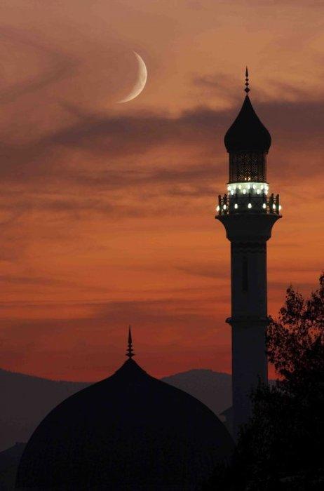 masjid-524-islampeace1.wordpress.com-586947